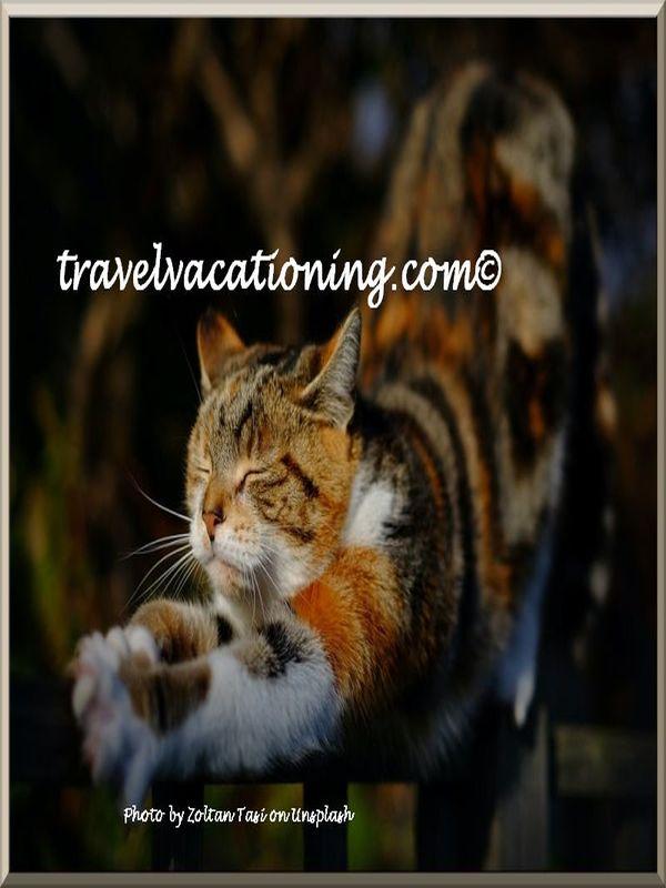 """""""travelvacationing"""""""